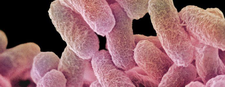 Salmonella: o que é, como acontece e como tratar