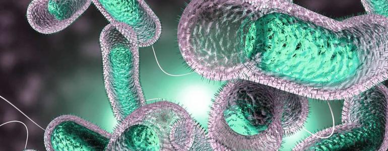 Você já ouviu falar em cólera? Conheça o que é e como acontece o problema