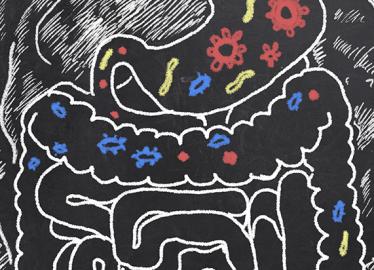 Desequilíbrio da flora intestinal afeta o sistema imunológico e a digestão? Acompanhe