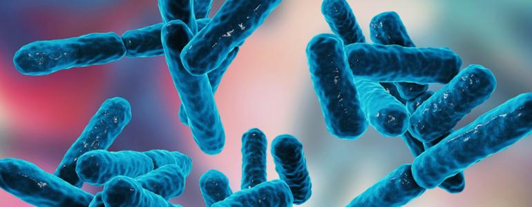Entenda quais são os benefícios dos probióticos